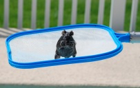 pool rat visitor