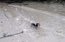 tarantula wader