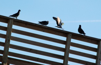 pigeon pier perch