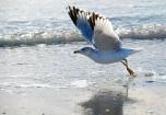 seagull flight, port a