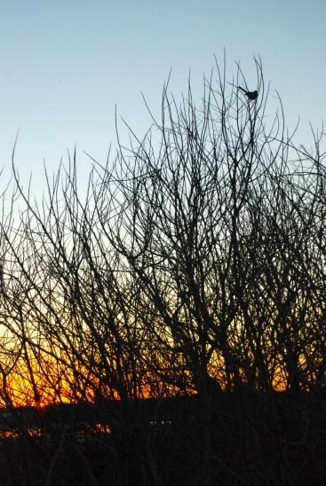charlie pasture, sunset