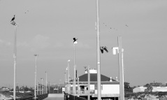 pier watch