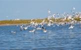 gull departure