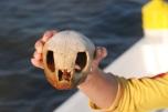 turtle skull find