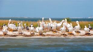 Grand ol Pelicans