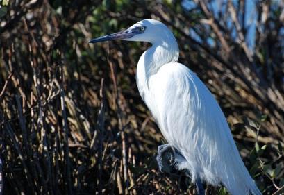 egret has nails