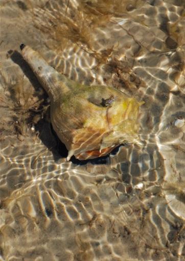 slug, sand bar